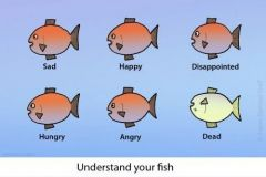 understand-your-fish